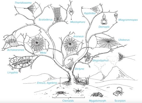 Spider-Webs.jpg